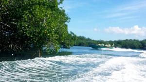 kanały lasów namorzynowych w okolicach Punta Rusia