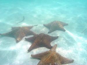 rozgwiazdy na dnie Morza Karaibskiego